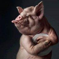 danish_pig
